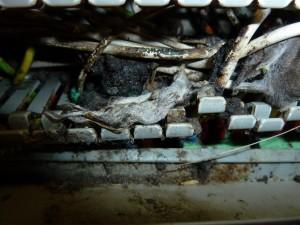 Schade muis meterkast
